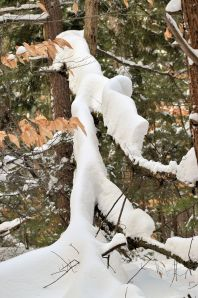 snow 138a
