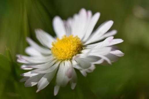 spring 006