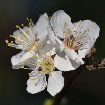 spring 089sq
